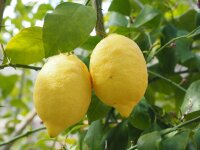 Batalia Olivenöl Zitrone extravergine