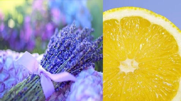 Zitronen Lavendel Crema Essig
